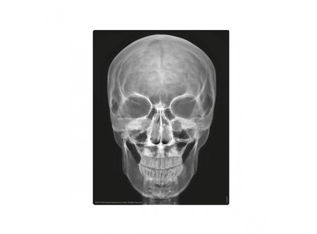 Набор 4M 00-03375 Юный врач. Скелет человека, фото , изображение 14