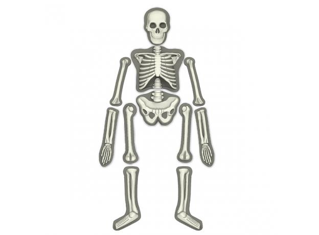 Набор 4M 00-03375 Юный врач. Скелет человека, фото , изображение 5
