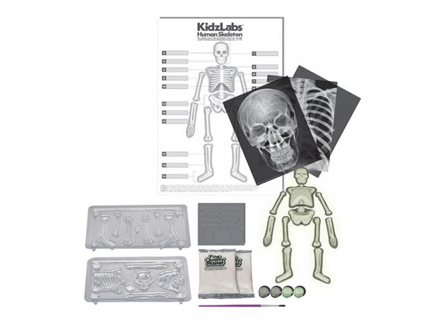 Набор 4M 00-03375 Юный врач. Скелет человека, фото , изображение 2