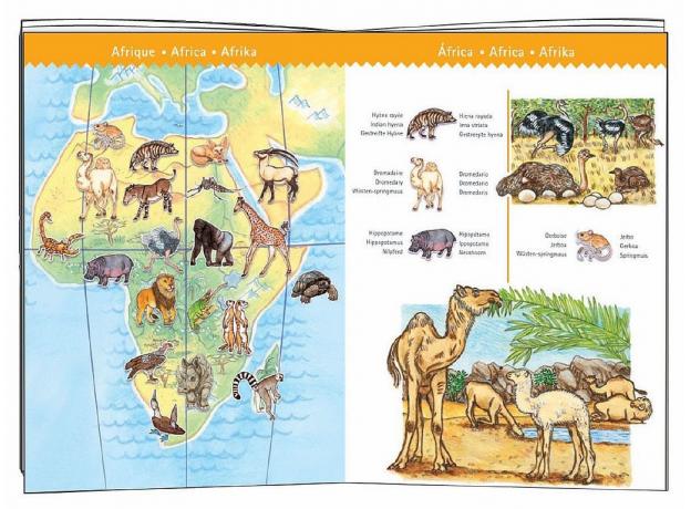 """DJECO Пазл """"Животные мира"""" (с буклетом) 07420, фото , изображение 3"""