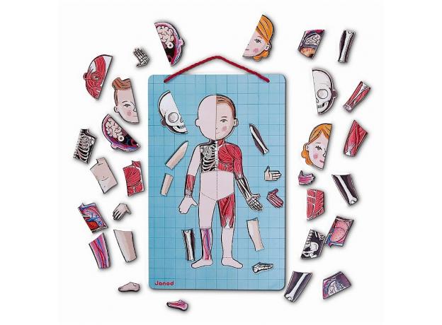 Карточки с магнитными пазлами Janod «Части тела», фото