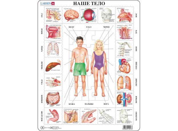LARSEN OB1 - Наше тело (Русский) OB2, фото